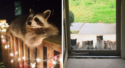 10+ Animals Who Came To Say 'Hi', And Melted Everyone's Hearts Daily News