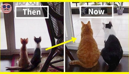 10+ Before & After Pics Of Animals Growing Up Together