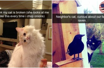 10+ Hilarious Cat Snapchats That You Need To See Right Meow