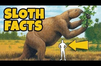10 Interesting Facts About Sloths