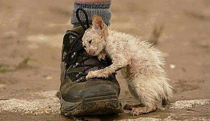10 True Stories That Will Restore Your Faith In Humanity. Part 2