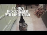 11 Things Only Cat Owners Would Understand