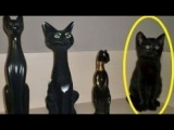 13 STRANGE things You Didn't Know About Black Cats