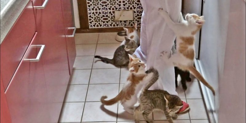 14 Very Hungry Kittens