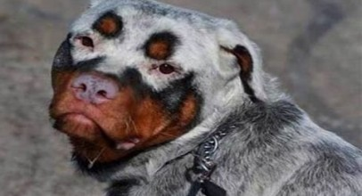 15 Dogs with Unbelievable Fur Markings