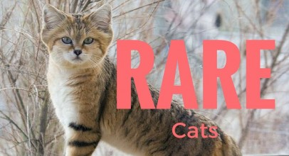 15 Rare Species Of Wild Cats That You Probably Didn't Know Existed