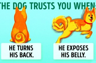 16 Useful Clues To Understand Your Dog Better