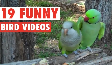 19 Funny Bird Videos