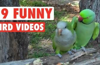 19 Funny Bird Videos