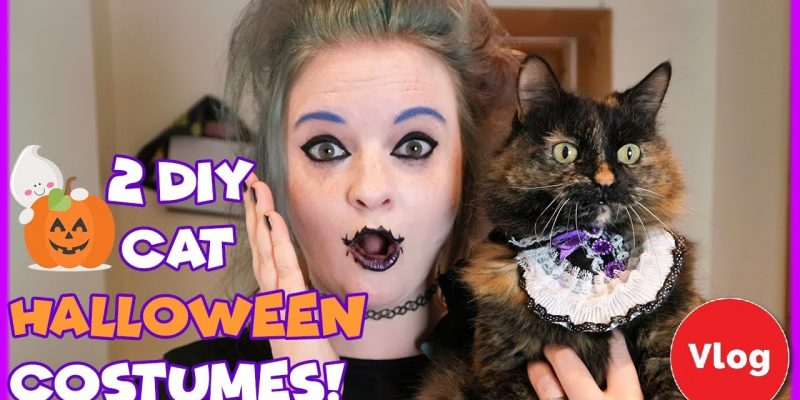 2 Easy DIY Halloween Costumes for Your Cat