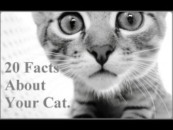 20 Facts About Your Cat – Things you must know !