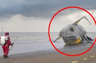 25 Bizarre Animal Photos Explained