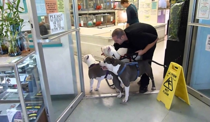3 Pit Bulls in a Pet Store! ** MUST WATCH**