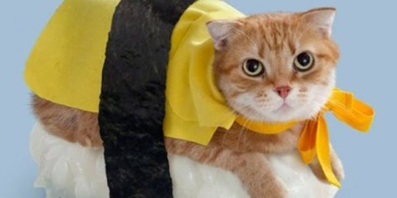 42 Cats in Ridiculous Halloween Costumes