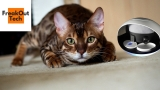 5 Incredible Inventions For Your Cat #4