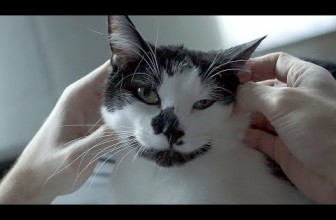 6 Signs Your Cat Loves You