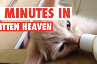 7 Minutes in Kitten Heaven Video Compilation 2016