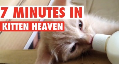 7 Minutes in Kitten Heaven Video Compilation 2016
