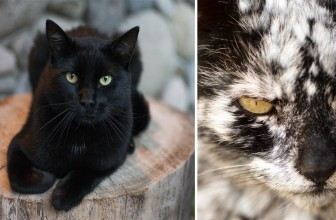 7 Years After He Adopts A Normal Black Cat, It Transforms Into Something Unexpected