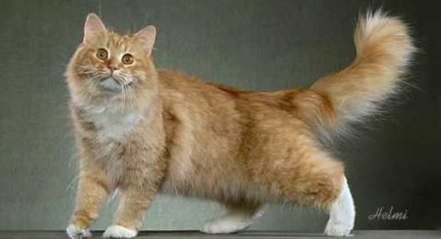 77 Cat Breeds in 4 and a half minutes – phew!