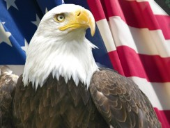 Top 10 FACTS You Didn't Know About Bald Eagles