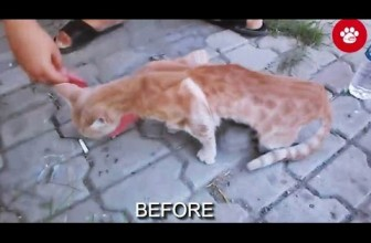 A Small Child Saved a Cat!