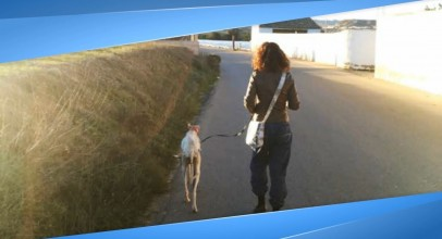 Abandoned Dog With A Broken Leg Leads Rescuers 2 Miles To Help Her Newborn Puppies