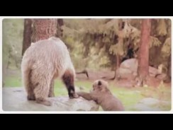 Adorable Baby Animals & Their Moms  Happy Mother's Day!