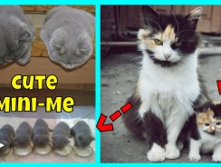 Adorable Cats With Their Cute Mini-Mes