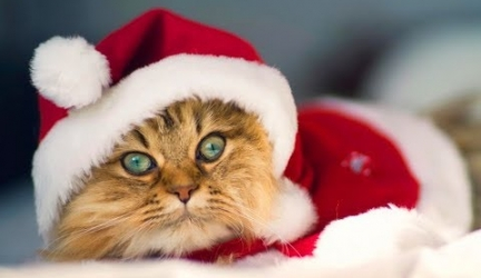 Adorable Pets Dressed Up For Christmas Video