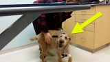 After This Blind Dog Got Surgery To See Again, His Adorable Reaction Touched 14 Million Hearts 2