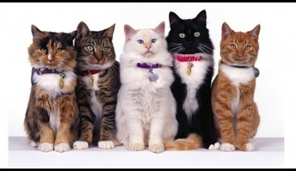All Cute Cat Breeds List From A to Z
