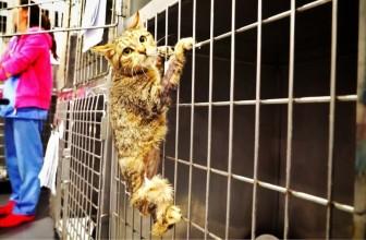 Amazing cat hero loses a leg then something EPIC happens