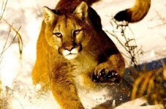 Animal Documentary National Geographic [Intimacy with the King of Andes] Full Documentary
