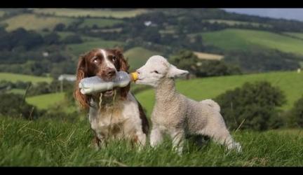 Animal Heroes 3 | Animals Feeding Other Animals