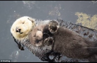 Animal Heroes 5  Mother's love, Saving and Protecting Their Baby   Soul Of Moms
