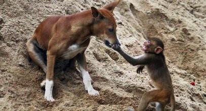 Animal Heroes | Animal Helps and Saves Other Animal