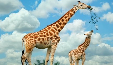 Anydocumentary | Giraffe Documentaries , Nature Documentary