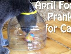 April Fools Prank for Cat