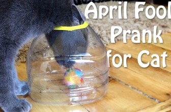 April Fools Prank for Cat