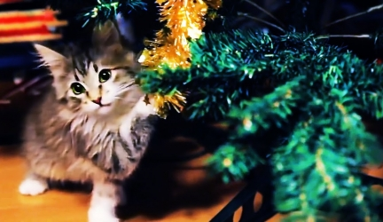 😻 СATS VS CHRISTMAS TREES 🎄