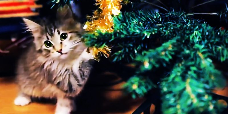 😻 СATS VS CHRISTMAS TREES 🎄