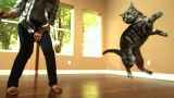 Awesome Cats In Slow Motion