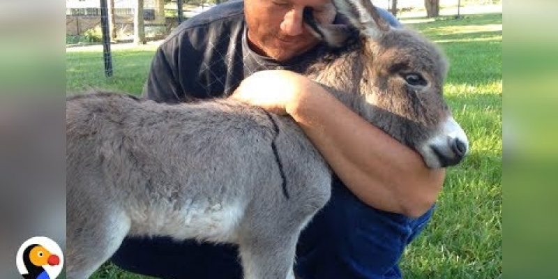 Baby Donkey Asks For More Hugs