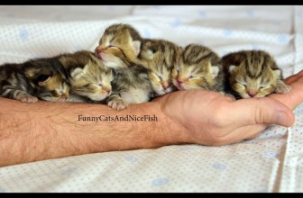Baby Kittens and Mom Cat of Funnycatsandnicefish Stream 2017