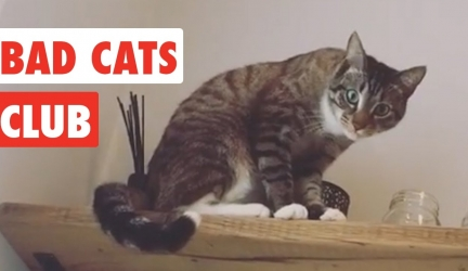 Bad Cats Club | Funny Cat Video Compilation 2017 Video