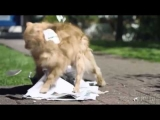 Be More Dog ~ Best Cat Commercial