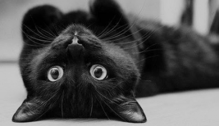 BE NICE TO BLACK CATS THIS HALLOWEEN!!