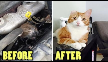 Before And After Pics Of Happy Rescued Cats