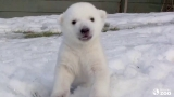 Best and funniest BABY animals enjoying SNOW